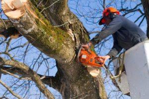 קורס גיזום עצים
