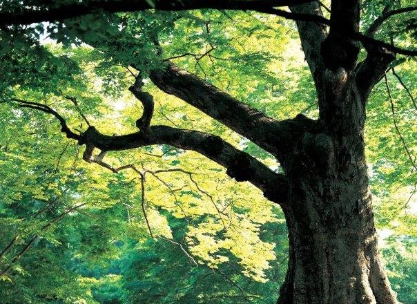 עיצוב עצים צעירים